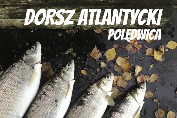 LuckyFish.pl-DORSZ-ATLANTYCKI-POLEDWICA.jpg